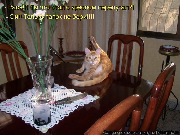 Котоматрица: - Вась!!! Ты что стол с креслом перепутал?! - Ой!! Только тапок не бери!!!!