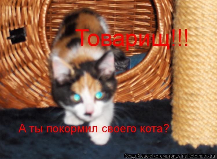 Котоматрица: Товарищ!!! А ты покормил своего кота?