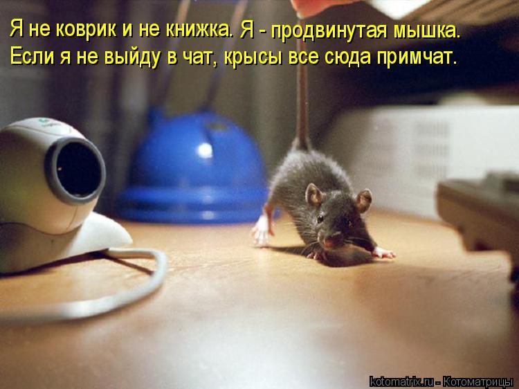 Котоматрица: Я не коврик и не книжка. Я - продвинутая мышка. Если я не выйду в чат, крысы все сюда примчат.