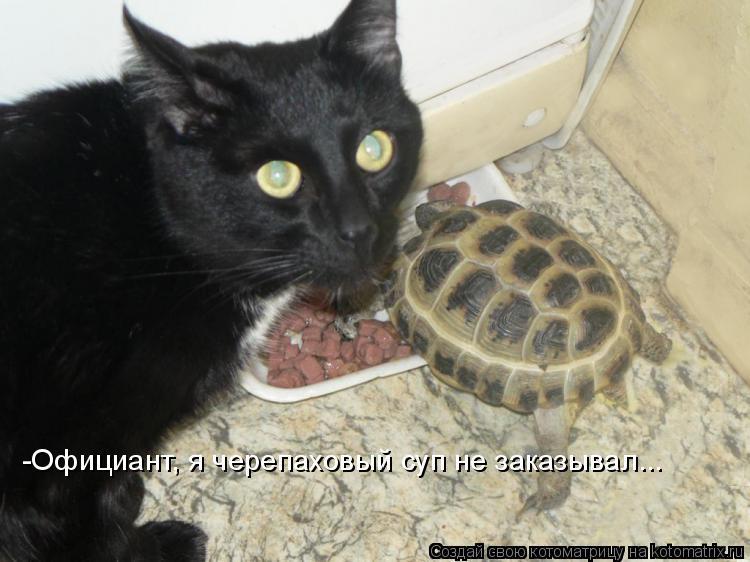 Котоматрица: -Официант, я черепаховый суп не заказывал...
