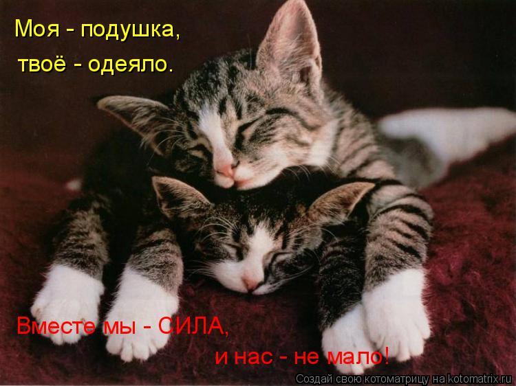 Котоматрица: Моя - подушка, твоё - одеяло. Вместе мы - СИЛА, и нас - не мало!