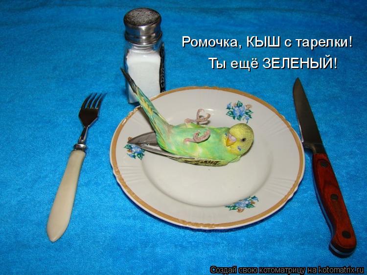 Котоматрица: Ромочка, КЫШ с тарелки! Ты ещё ЗЕЛЕНЫЙ!