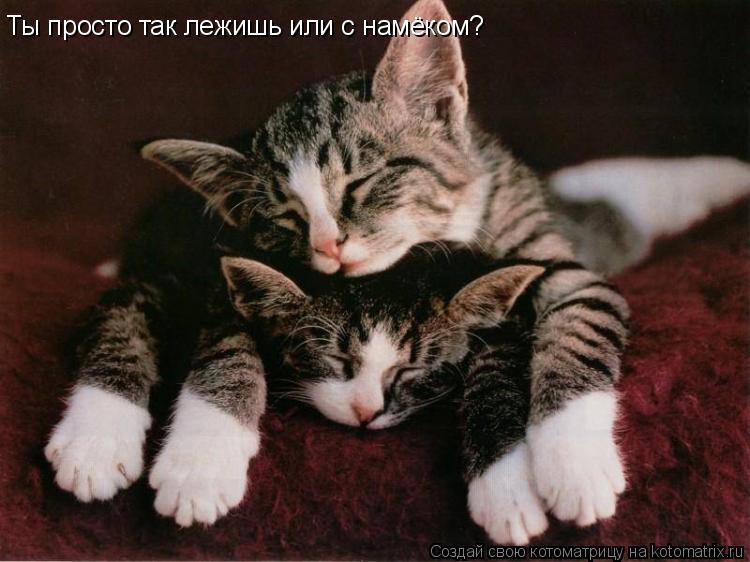 Котоматрица: Ты просто так лежишь или с намёком?