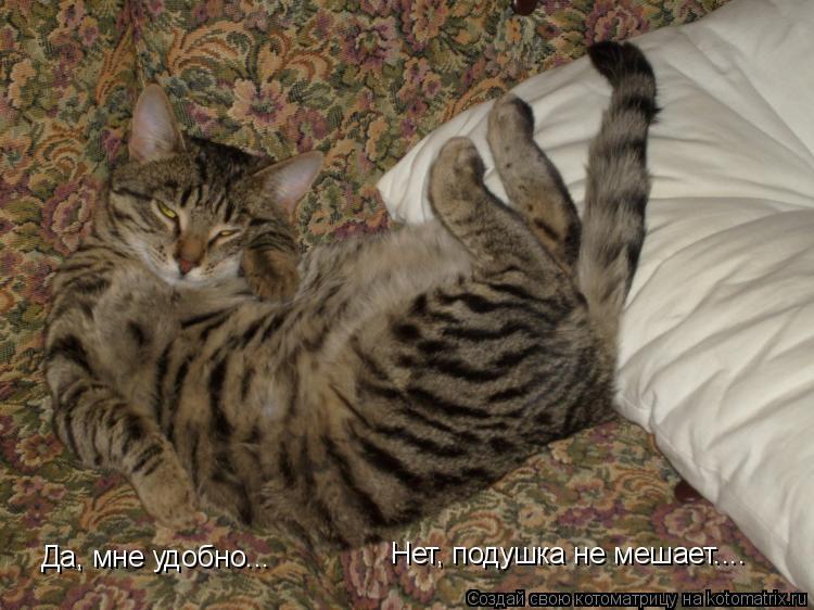 Котоматрица: Да, мне удобно... Нет, подушка не мешает.... Нет, подушка не мешает....