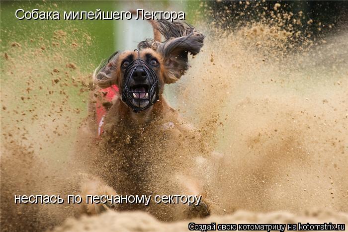 Котоматрица: Собака милейшего Лектора  неслась по песчаному сектору