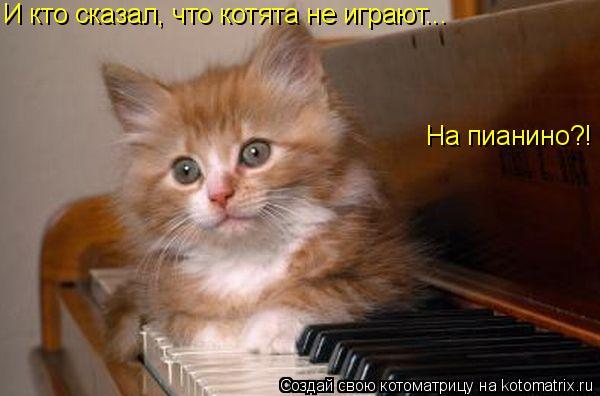 Котоматрица: И кто сказал, что котята не играют... На пианино?!