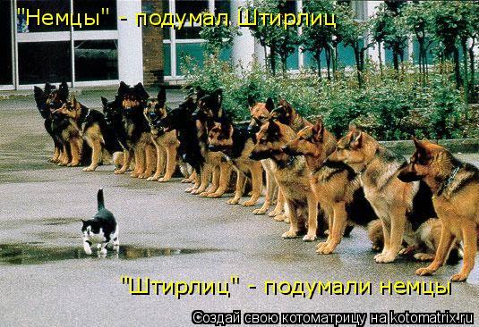 """Котоматрица: """"Немцы"""" - подумал Штирлиц """"Штирлиц"""" - подумали немцы"""