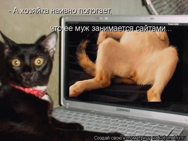 Котоматрица: - А хозяйка наивно пологает, что ее муж занимается сайтами...