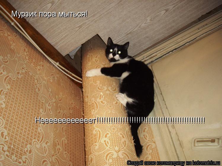 Котоматрица: Мурзик пора мыться! Неееееееееееет!!!!!!!!!!!!!!!!!!!!!!!!!!!!!!!!!!!!!!!!!!!!!!