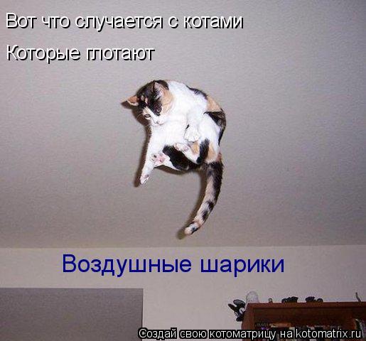 Котоматрица: Вот что случается с котами Которые глотают  Воздушные шарики