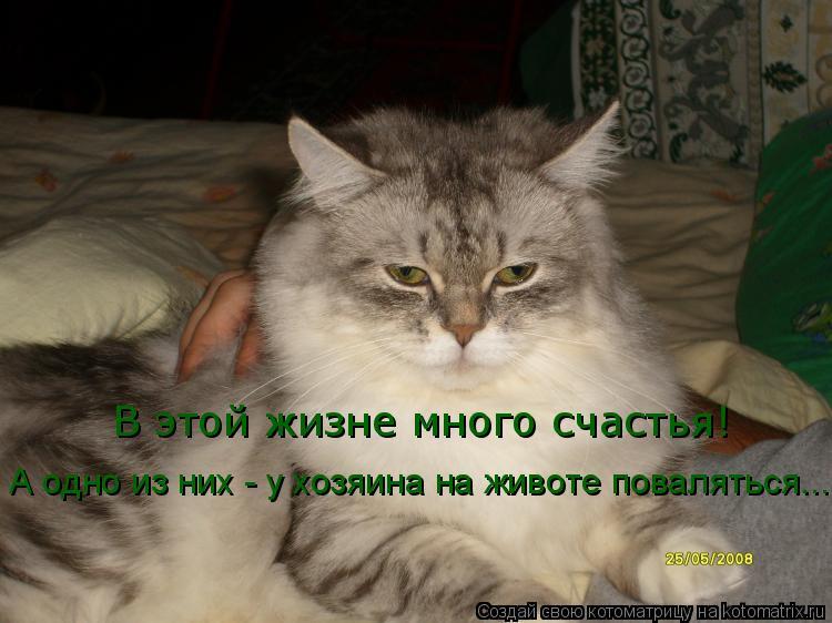 Котоматрица: В этой жизне много счастья! А одно из них - у хозяина на животе поваляться...