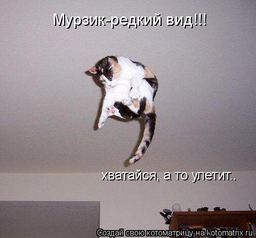 Котоматрица: хватайся, а то улетит.. Мурзик-редкий вид!!!