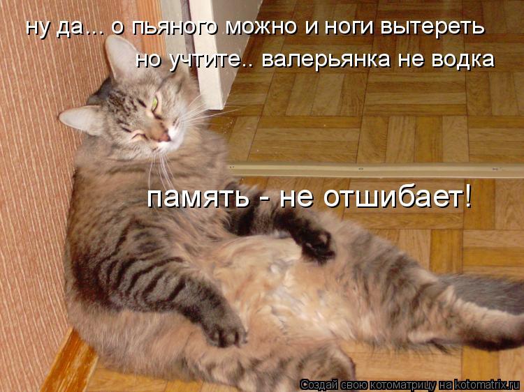 Котоматрица: но учтите.. валерьянка не водка память - не отшибает! ну да... о пьяного можно и ноги вытереть