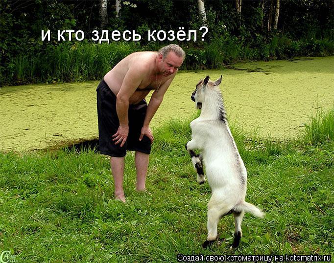 Котоматрица: и кто здесь козёл?