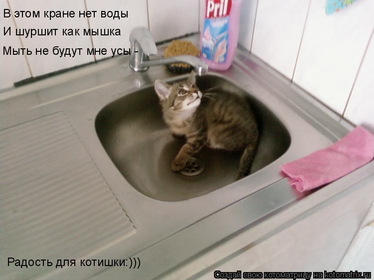 Котоматрица: В этом кране нет воды И шуршит как мышка Мыть не будут мне усы - Радость для котишки:)))