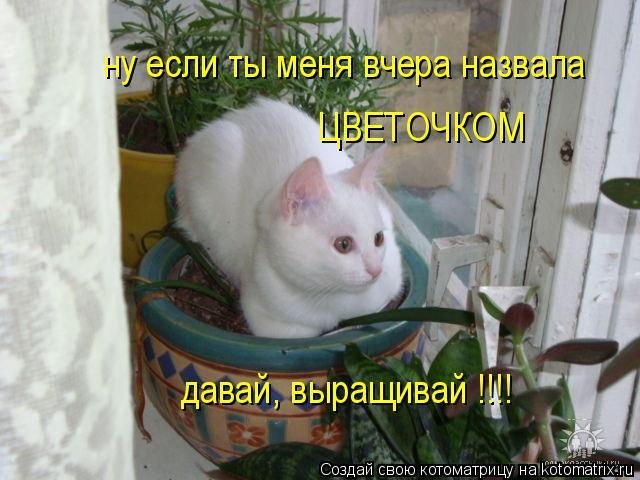 Котоматрица: ну если ты меня вчера назвала  ЦВЕТОЧКОМ давай, выращивай !!!!