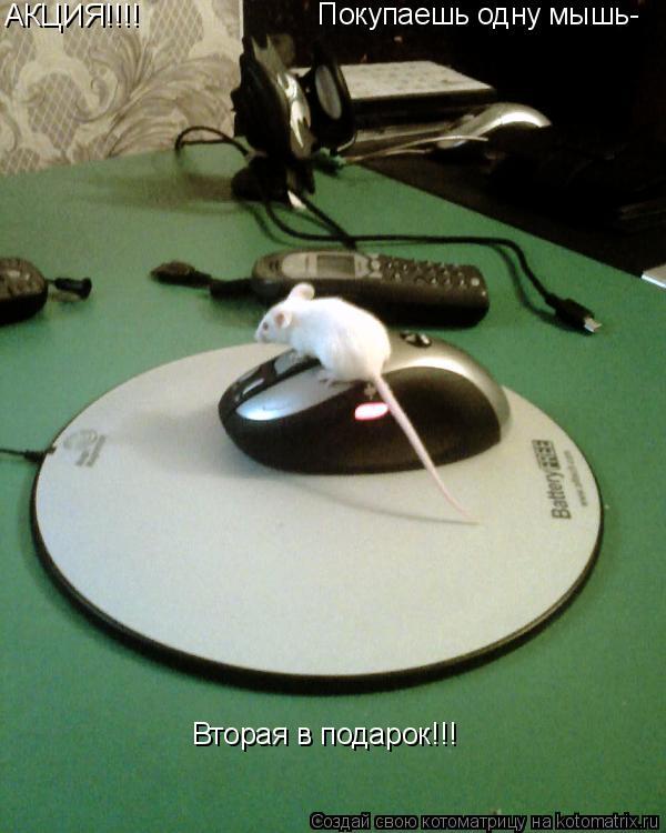 Котоматрица: АКЦИЯ!!!! Покупаешь одну мышь- Вторая в подарок!!!