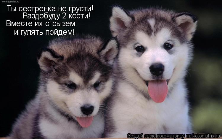 Котоматрица: Ты сестренка не грусти! Раздобуду 2 кости! Вместе их сгрызем, и гулять пойдем!