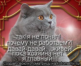 Котоматрица: так!я не понял! почему не работаем?! давай-давай....живей! пока хозяина нет  я главный!!!