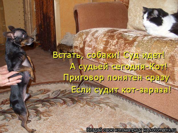 Котоматрица: Встать, собаки! Суд идет! А судьей сегодня-Кот! Приговор понятен сразу Если судит кот-зараза!