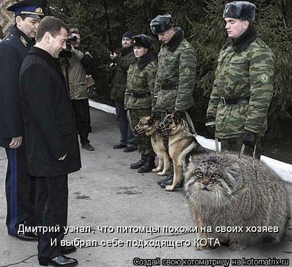 Котоматрица: Дмитрий узнал, что питомцы похожи на своих хозяев И выбрал себе подходящего КОТА