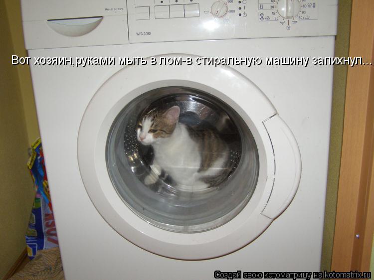 Котоматрица: Вот хозяин,руками мыть в лом-в стиральную машину запихнул...