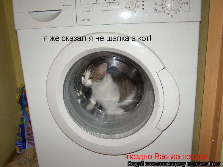 Котоматрица: я же сказал-я не шапка,а кот! -поздно,Васька,поздно...