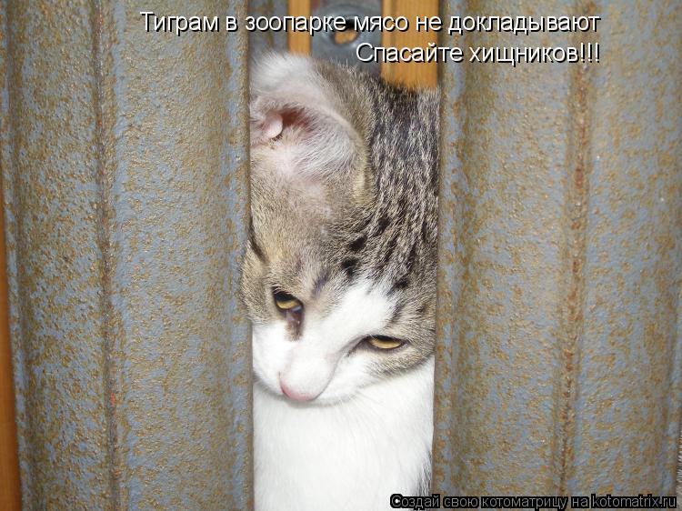 Котоматрица: Тиграм в зоопарке мясо не докладывают Спасайте хищников !!!