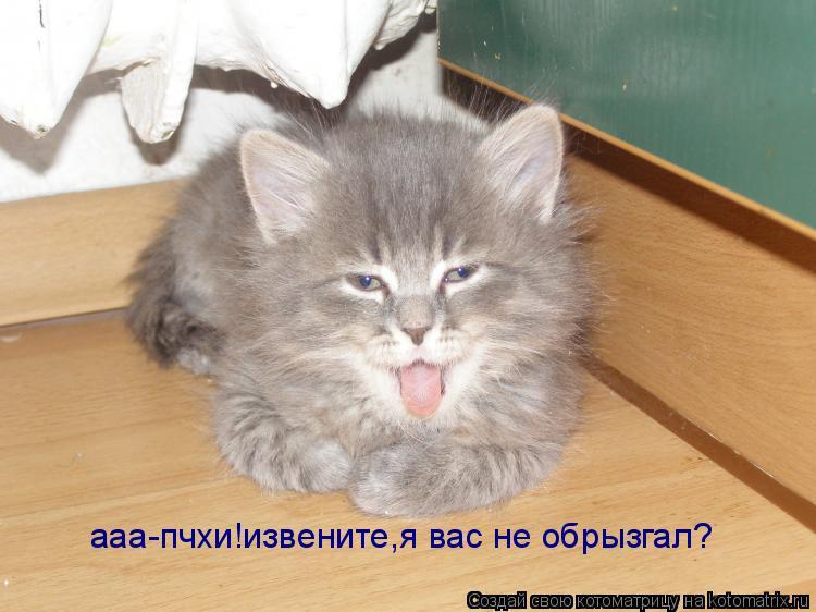 Котоматрица: ааа-пчхи!извените,я вас не обрызгал?