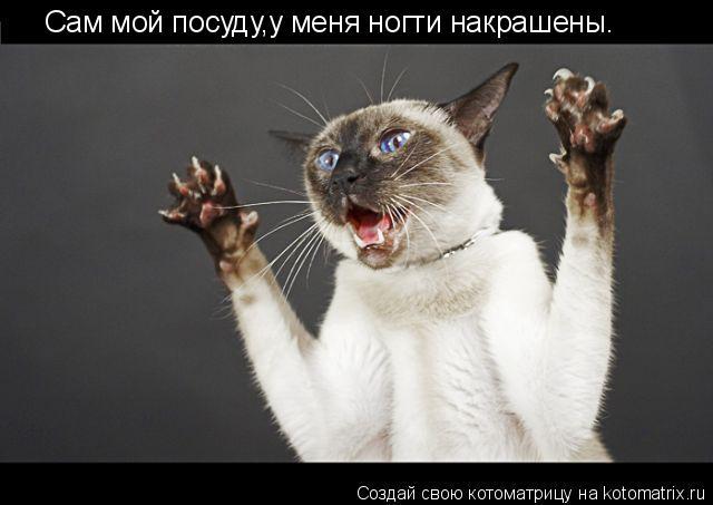 Котоматрица: Сам мой посуду,у меня ногти накрашены.