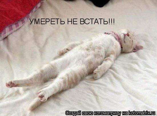 Котоматрица: УМЕРЕТЬ НЕ ВСТАТЬ!!!