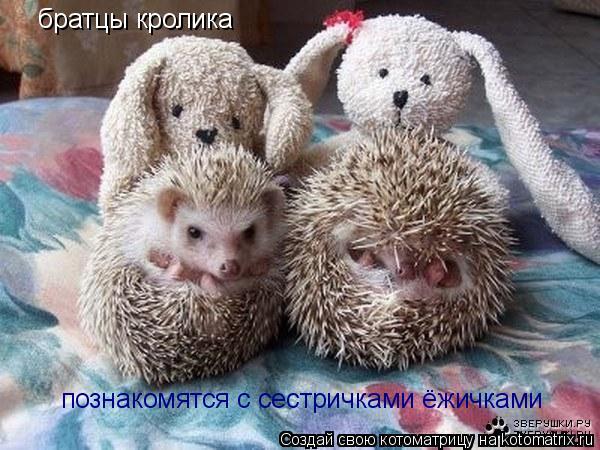 Котоматрица: братцы кролика познакомятся с сестричками ёжичками