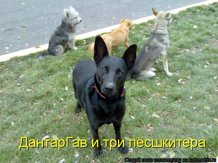 Котоматрица: ДантарГав и три пёсшкитера