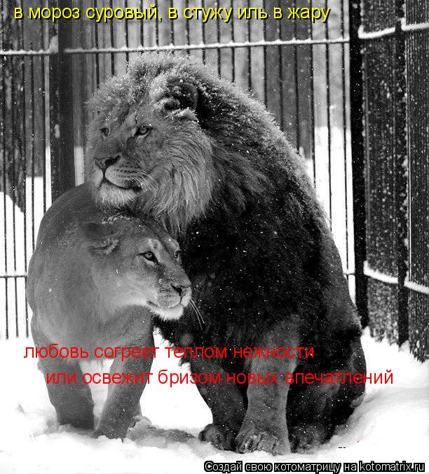 Котоматрица: в мороз суровый, в стужу иль в жару любовь согреет теплом нежности или освежит бризом новых впечатлений