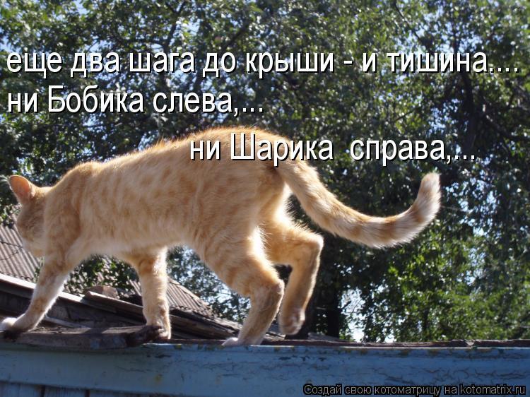 Котоматрица: еще два шага до крыши - и тишина.... ни Бобика слева,... ни Шарика  справа,...