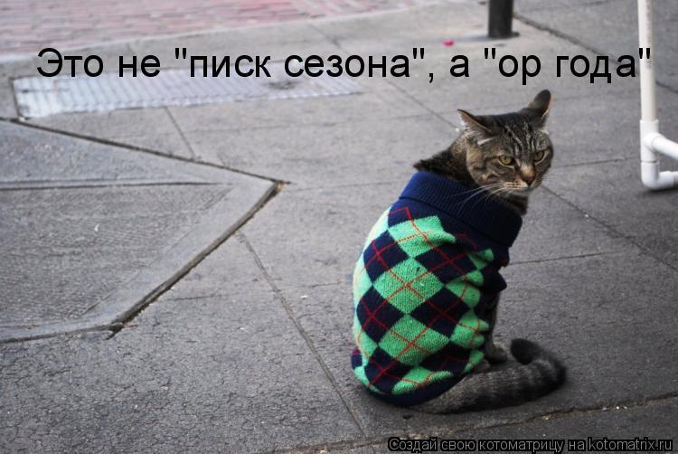 """Котоматрица: Это не """"писк сезона"""", а """"ор года"""""""