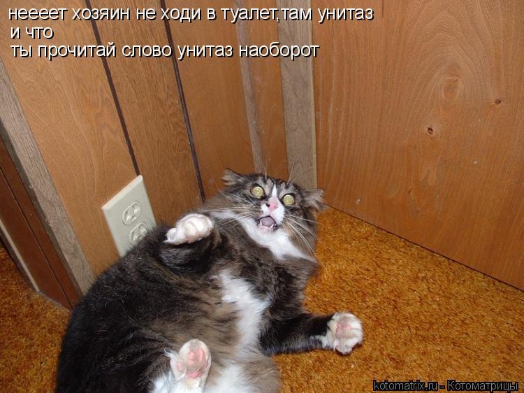 Котоматрица: неееет хозяин не ходи в туалет,там унитаз и что ты прочитай слово унитаз наоборот