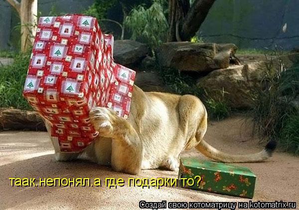 Котоматрица: таак.непонял.а где подарки то?