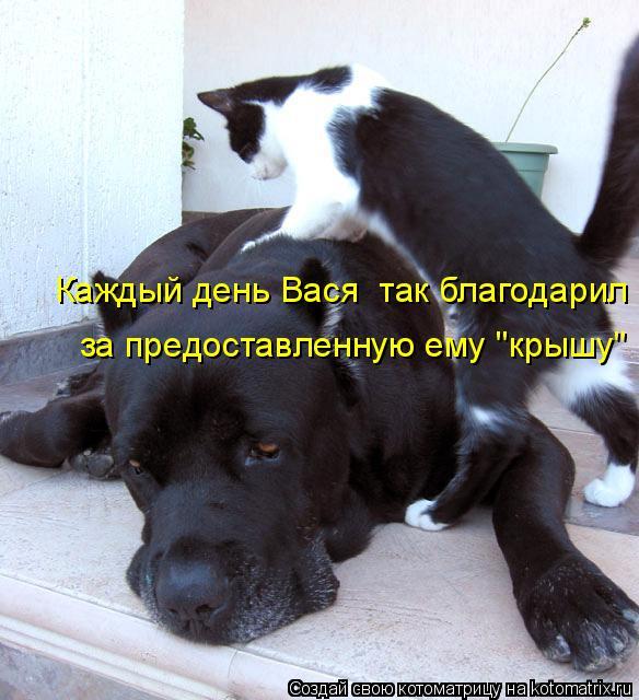 """Котоматрица: Каждый день Вася  так благодарил за предоставленную ему """"крышу"""""""