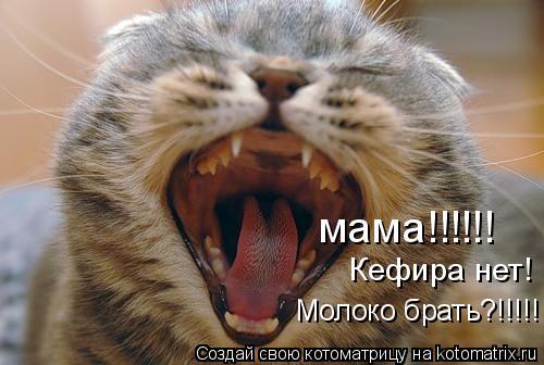 Котоматрица: мама!!!!!!  Кефира нет!  Молоко брать?!!!!!