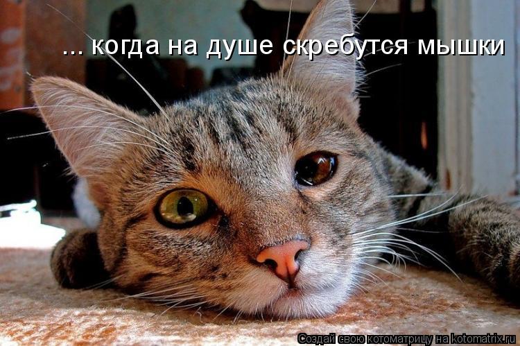 Котоматрица: ... когда на душе скребутся мышки