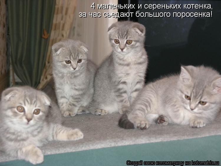 Котоматрица: 4 маленьких и сереньких котенка, за час сьедают большого поросенка!