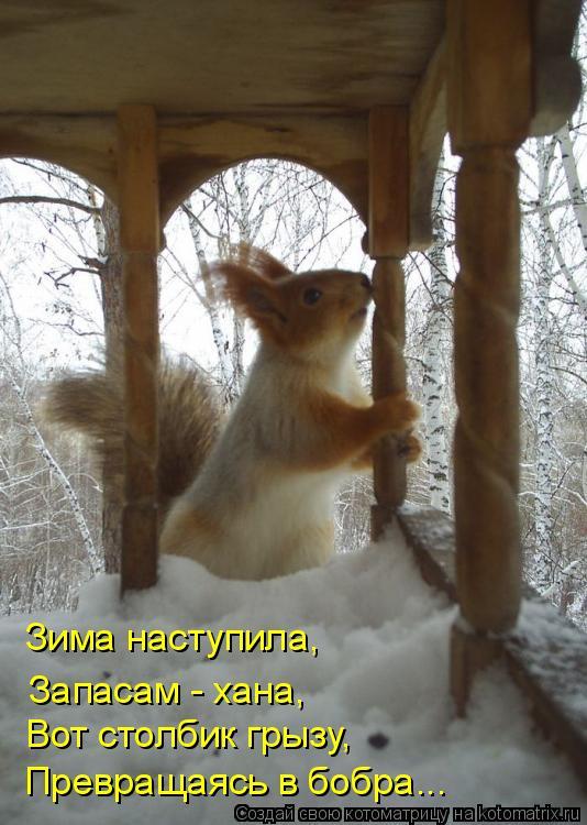 Котоматрица: Зима наступила, Вот столбик грызу, Превращаясь в бобра... Запасам - хана,