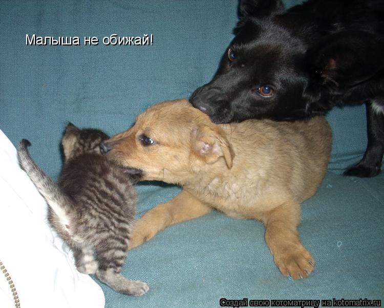 Котоматрица: Малыша не обижай!