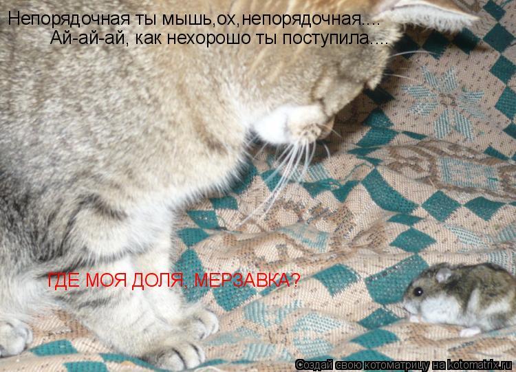 Котоматрица: Непорядочная ты мышь,ох,непорядочная....  Ай-ай-ай, как нехорошо ты поступила.... ГДЕ МОЯ ДОЛЯ, МЕРЗАВКА?
