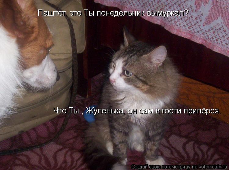 Котоматрица: Паштет, это Ты понедельник вымуркал? Что Ты , Жуленька, он сам в гости припёрся.