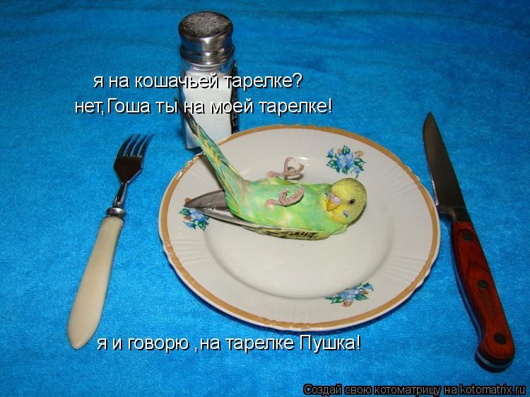 Котоматрица: я на кошачьей тарелке? нет,Гоша ты на моей тарелке! я и говорю ,на тарелке Пушка!