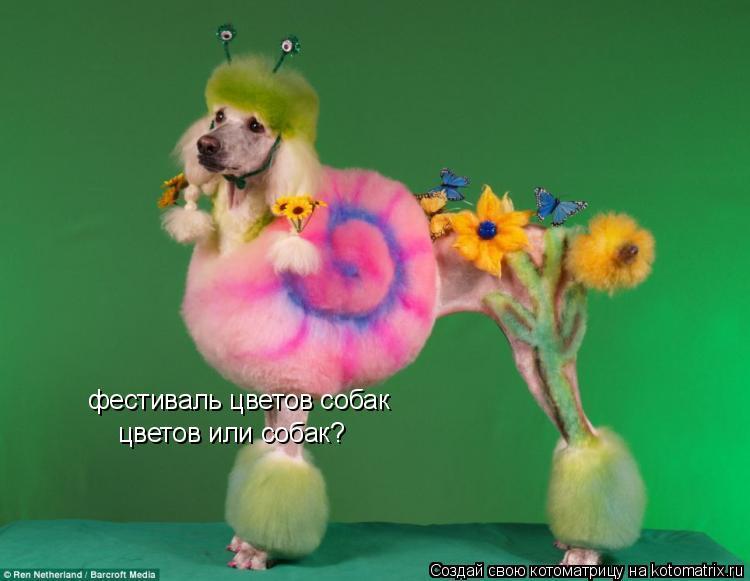 Котоматрица: фестиваль цветов собак цветов или собак?