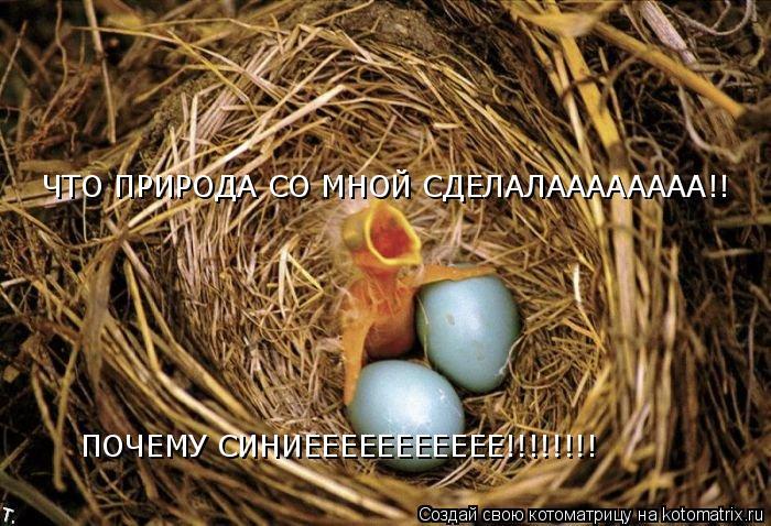 Котоматрица: ЧТО ПРИРОДА СО МНОЙ СДЕЛАЛАААААААА!! ПОЧЕМУ СИНИЕЕЕЕЕЕЕЕЕЕЕ!!!!!!!!