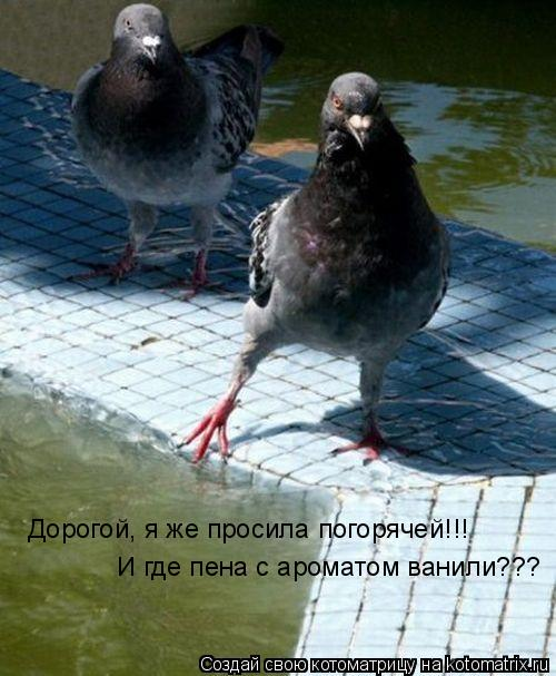 Котоматрица: Дорогой, я же просила погорячей!!! И где пена с ароматом ванили???